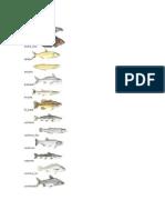 Peixes de Água Doce