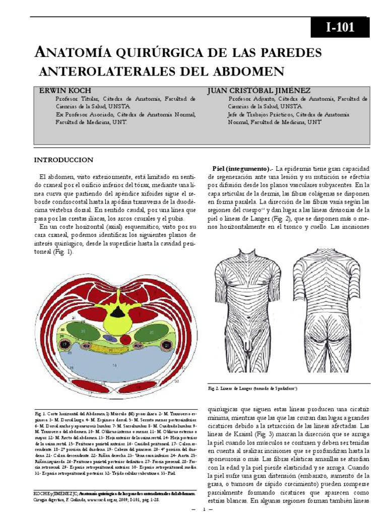 Anatomia de Pared Abdominal