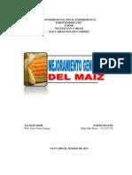 EL MEJORAMIENTO GENÉTICO DEL MAÍZ (ENSAYO-EDDY MAR)