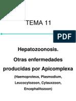Tema11 Hepatozoonosis Otras Enfermedades Producidas Por Apicomplexa