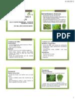Plantas Med e Ornamentais - Aula 3-Samambaias e Avencas