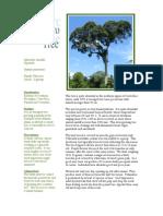 infosheetalmendrotree