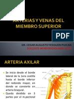 Arterias, Venas y Nervios Del Miembro Superior