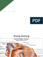 anatomi mentah