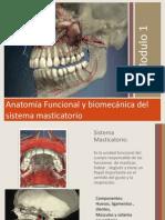 Anatomia Funcional y Biomecnica Del Sistema Masticatorio Vpdf