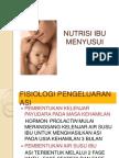 Nutrisi Ibu Menyusui