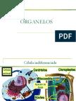 Organelos Celulares Clase 4