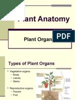 Plant Organs Roots