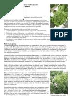sp_hydroponia-y-estevia-rebaudiana.pdf