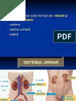 112848593-sistemul-urinar