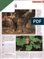 246. Stejarii.pdf