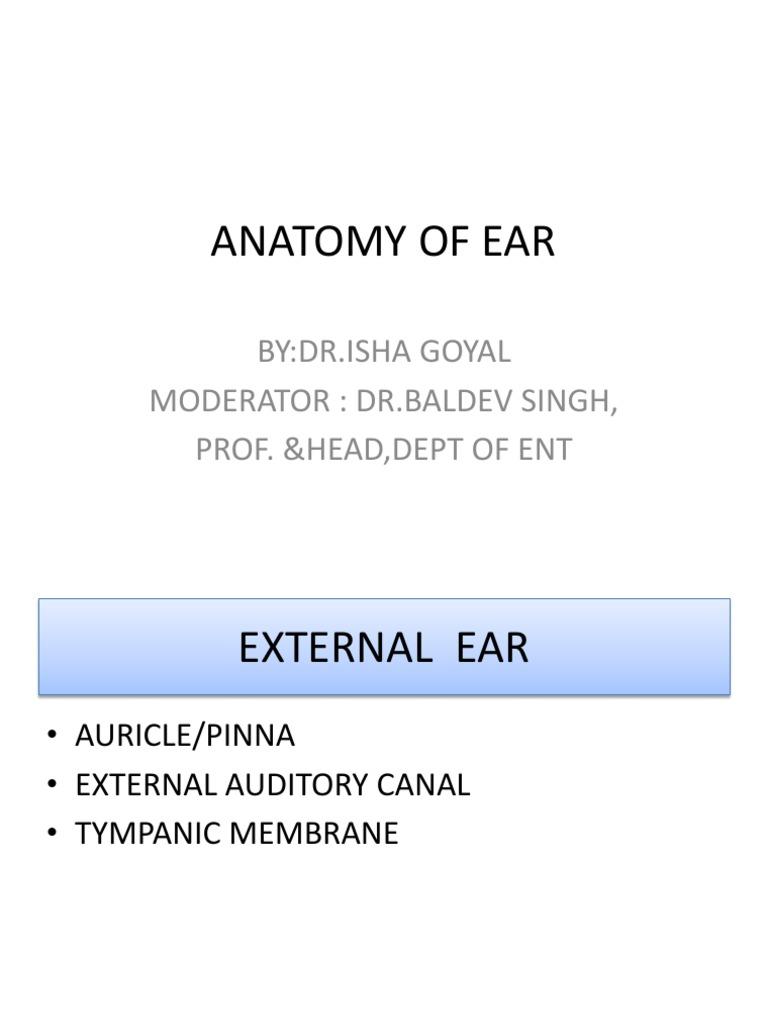 Anatomy Of Ear Ear Human Leg