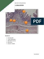 Practical Histology 5