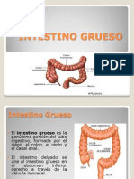 INTESTINO GRUESO morfo 2
