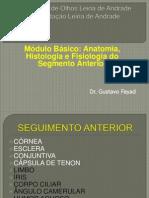 Anatomia e Histologia Do Segmento Anterior - Agosto 2011 - Fayad