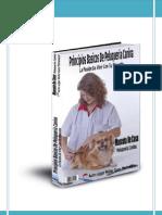 Principio basicos PeluquerÍa canina.pdf