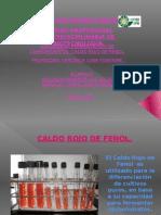 Presentacion Caldo Rojo de Fenol