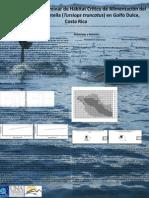Pacheco-Polanco D. & Oviedo L. (2007). Determinación preliminar de hábitat crítico de alimentación del delfín nariz de botella (Tursiops truncatus) en Golfo Dulce, Costa Rica. Poster Presentation