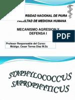 Staphylococcus Saprophyticus2007 -II