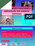 Organización_del_sistema_nervioso_Clase_1