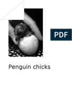 Penguin Chicks COME OUT