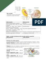 Celula y Funciones
