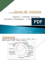 Artropodos  Vectores  Interés   Alergológico  y  Dermatológico.pptx