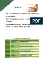 Estructura de las proteínas_13A