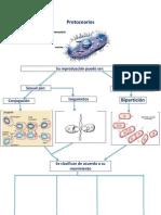 Protozoarios MAPA MENTAL