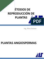 Angiospermas y Gimnospermas