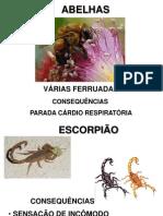 animais_peçonhentos
