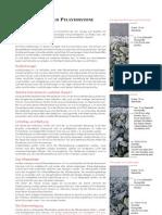 jasto-verlegeanleitung-pflastersteine
