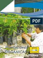 Plantaciones Organicas en Fincas Cacaoteras