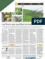 Las Flores Que Pueblan Las Lomas Costeras