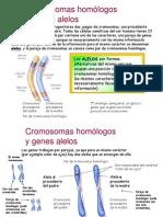 Genética alelos