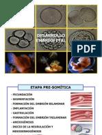 Secc 1...Desarrollo Embriofetal...Samuel Vasquez (01.04.2013)