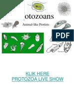 Aver1_Protozoa3Sept2012
