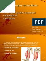 Los Grupos Musculares