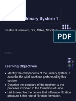 Genitourinary System 1