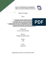 Tarea de Fisiologia Funciones de Los Nucleos Del Talamo e Hipotalamo