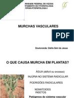 4.0MurchasVasculares