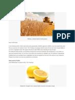 Hybrids vs. GMOs