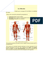 Los Músculos y la unidad motora