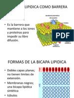 La Bicapa Lipidica Como Barrera