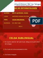 Celdilla Sub-lingual (Ppt)