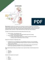 Pengertian Homeostasis Dan Osmoregulasi
