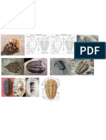 Fossil Artropoda