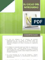 El Ciclo Del Nitrogeno