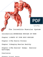 The Incredible Muscular System