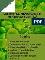 protoplasti